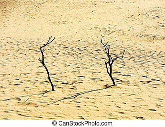 Dead trees on the sand at sunset