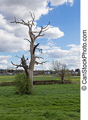 Dead trees still standing in the countryside
