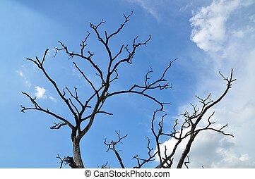 Dead twigs The blue sky