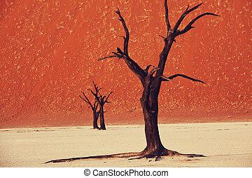 Namib - Dead Valley in Namib desert