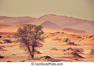 Namib - Dead valley in Namibia