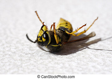 Dead wasp lying on the ground