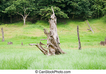 dead wood in forest