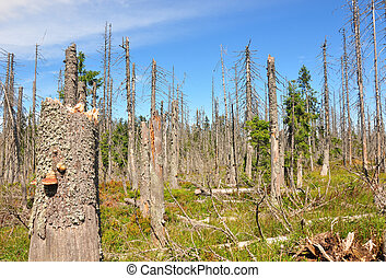 Dead wood in national park Bavarian Forest