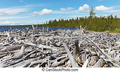 Dead wood on shore of Lake