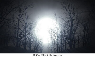 Dead Woods - A bright moon shinning into dead woods.