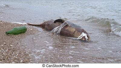 Dead young dolphin on the sea shore. Earth wildlife, environmental pollution, ecological catastrophe. Dead animal