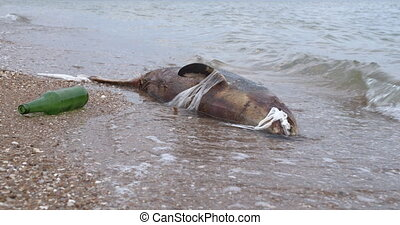 Dead young dolphin on the sea shore. Earth wildlife,...