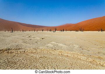 Deadvlei, a white clay pan in Sossusvlei, inside the Namib desert.
