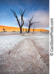 deadvlei trees and earth