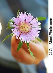 Dealbata flower