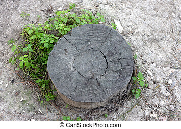 Stump of a cut tree surrounded by a plant