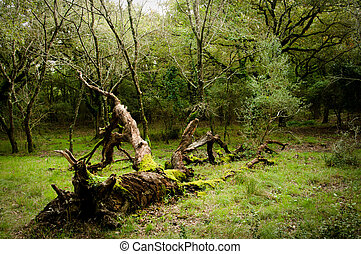 Death of a tree, autumn - A dead tree laying on the forest ...