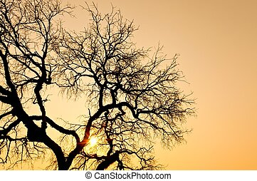 Death of a tree in the  sunset
