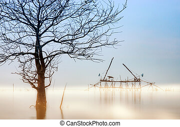 Death tree in the morning and mist over the lake.