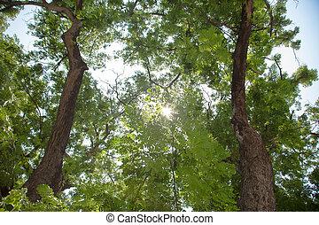 debajo, árboles