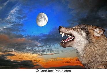 debajo, lobo, luna