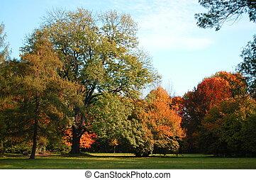 debajo, otoño, árboles, celeste, parque verde