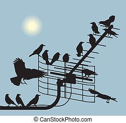 Debate crows