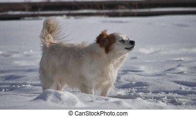 debout, aboyer, problème, chien, neige, hiver, cold., queue...