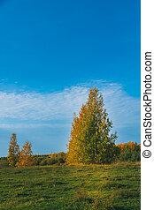 debout, arbres, separately, vert, clairière, herbe