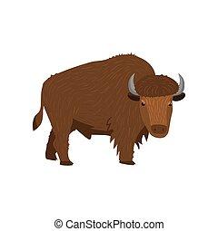 debout, brun, téléspectateur, grand, regarder, bison américain, fond, blanc