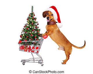 debout, chariot, achats, chien, suivant, teckel