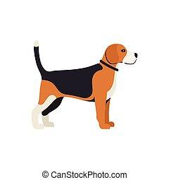 debout, couleur, race, -, chien, beagle, vecteur, sérieux