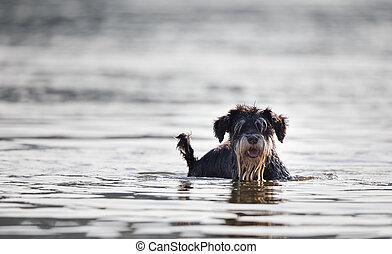 debout, eau, peu profond, chien