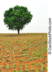debout, feuille, printemps, arbre, pin, tôt, croissance, seul, nouveau