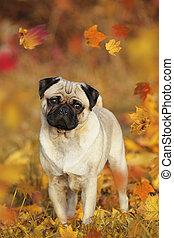 debout, feuilles automne, carlin, beige