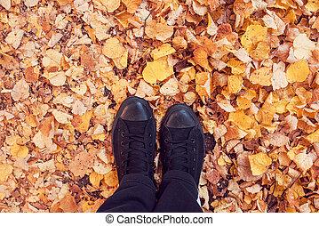 debout, feuilles automne, terrestre, couvert