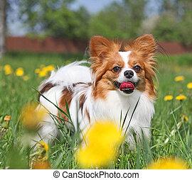 debout, fleurs, chien, jaune