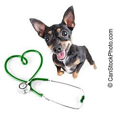 debout, isolated., sommet, vétérinaire, chien, autre, stéthoscope, animaux familiers, chiens, vue