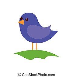 debout, mignon, oiseau, dessin animé, champ