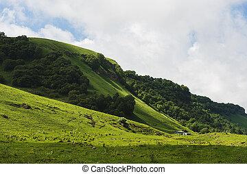 debout, montagnes, été, campagne, vallonné, hutte, vert, petit, pâturage, suivant, paysage