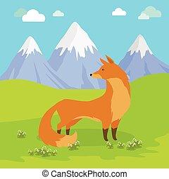 debout, montagnes., renard, pré, rouges