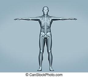 debout, numérique, gris, squelette, corps