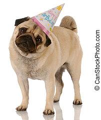 debout, porter, carlin, anniversaire, fond, chapeau blanc