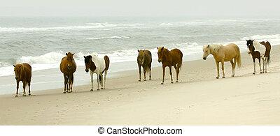 debout, sept, chincoteague, poneys, assateague, plage