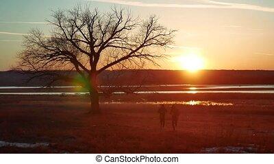 debout, silhouette, nature, athlétique, arbre, jeune, pin, silhouette., bas, sain, courant, coucher soleil, forêt, homme, dehors, seul, style de vie, sport, route, sunlight.
