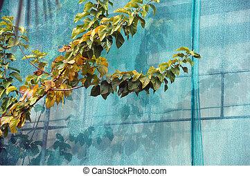 debris netting branches
