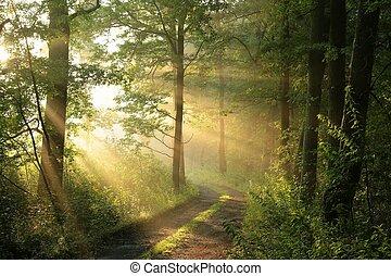 decíduo, floresta, alvorada