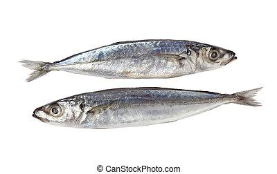 decapterus, pez