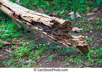 Decay wood in garden or park. wheathered wood.