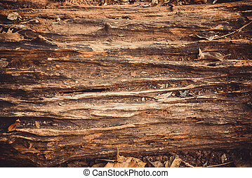 Decay wood in garden or park. wheathered wood. vintage tone ...