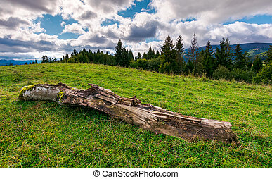 decaying log on the grassy meadow near the forest. wonderful...