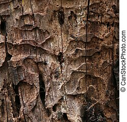 Close up of decaying tree trunk textyre