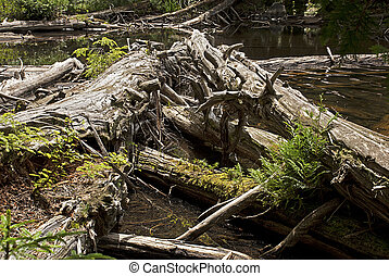 Decaying wood in a wilderness area in New York's Adirondacks