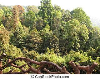 Deciduous and coniferous subtropical forest.
